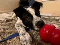 My story Hi! I'm Yosemite. I'm a shy puppy looking for