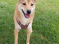 Yoshi***ADOPTION PENDING***'s story For more