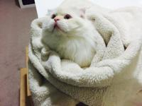 Re-posting I have a 1 year old scottish fold male for