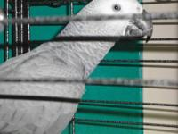 I have an African Grey I need to find a new home for. I