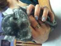 I have 4 chinchillas for sale 3 males of which are