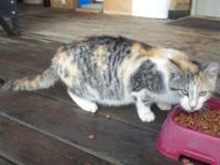 Callie is a calico lady who was birthed August 2nd,