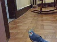 I have a meyers parrot I would like to rehome Its just
