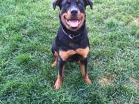 I have a neutered male Rott that will be 1 yr old on