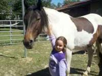 I have a 6 yr old almost 7 yr old Tri color paint mare