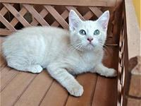 Yukon's story Adoption fee is $75, this kittens approx