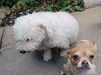 Yummy's story Rex & Yummy are bonded friends who have