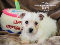 Yvette's story Please contact Constance