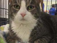 Zacky is a 10 year old male domestic short hair cat. He