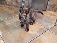 Zadie's story I'm a playful kitten looking for the