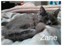 This little cutie is Zane. He has 2 speeds, fast and