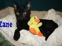 Zane's story I am a sweet baby looking for my FURever