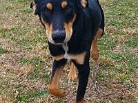 Zane's story Thank you for your interest in adopting.