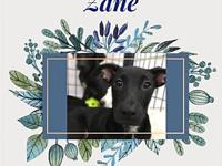 My story Zane was rescued with his 5 other sisters and