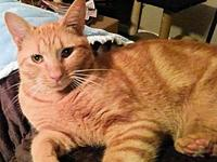 Zara's story Zara is a female orange tabby cat, born on