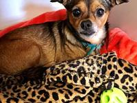 ZARAH's story Looking for a cuddle bug? Come meet