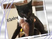 Zaxby's story Kittens that have not been spayed or