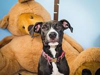 Zazu's story This sweet baby girl is one of six