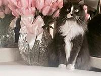 ZCL Mandy's story Defenseless due to Declawing - needs
