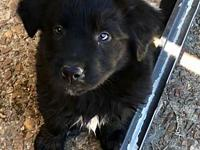 ZEBO's story Zebo is a precious little guy who loves