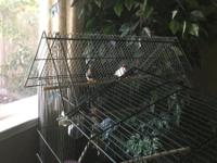 one male, one female zebra finch birds to a good home.