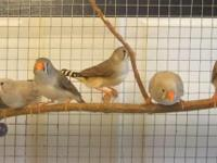 I have bonded pairs of zebra finches I need to rehome.