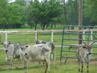 I have four 4 & 5 year old zebu cows & 1 zebu bull 3