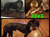 Zeke's story Zeke came to us not in great shape. But a