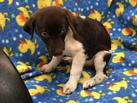 My story I am an 9 week old puppy looking for a great