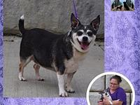 Zelda's story Zelda is a nine year old Chihuahua who is