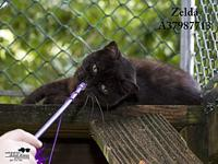 Zelda's story All cats in the adoption program are