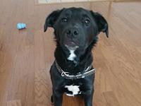 Zelda's story Smart and cute! I am an energetic girl