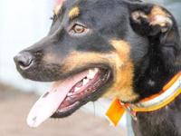 Zelda's story Zelda is a striking black and tan mixed