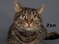ZEN's story Meet Zen! Because his previous owner loved