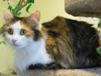 Zen is a gorgeous 7 year old adult female Long Haired