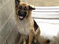 Zena's story Zena is a pup with special needs. She has