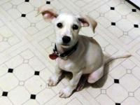 Zena is a 12 week old Lab mix pup from St. Thomas. She