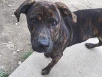 Zephyr is a gentle boy who is available through the