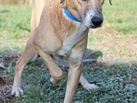 Zerow's story Zerow #9693 is a 4-year-old male,
