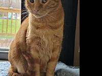 My story Zeus is a male red tabby and is blind in one