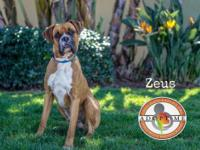 Welcome Zeus! In his few days with us hes proven to be