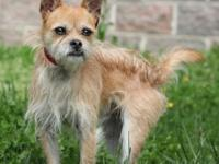 Zeus is a Chihuahua/Yorkie mix whose birthday is