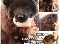 Zeus from Korea's story My name is Zeus from Korea and