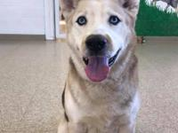 Hi, Im Zeus and I am a 6 year old Husky Shepherd mix.