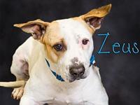 Zeus's story Poor Zeus and his friends were rescued