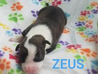 Zeus's story Zeus is a male pup from Joy aka Big Mamma