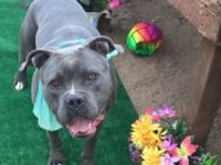Zeus, rescued Easter weekend from the Carson shelter.