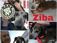 Ziba's story Ziba has been to see that DARE vet and we