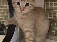 Ziggy's story Ziggy and his siblings were abandoned
