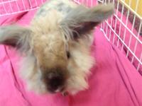 My name is Ziggy. I am a 2 year old bunny looking for a